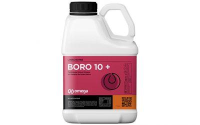 Boro 10+
